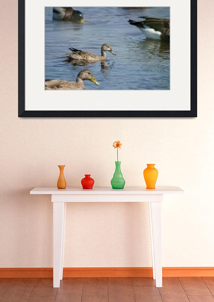 """""""Water Fowl at Cape May&quot  (2012) by WildAboutNaturePhotography"""