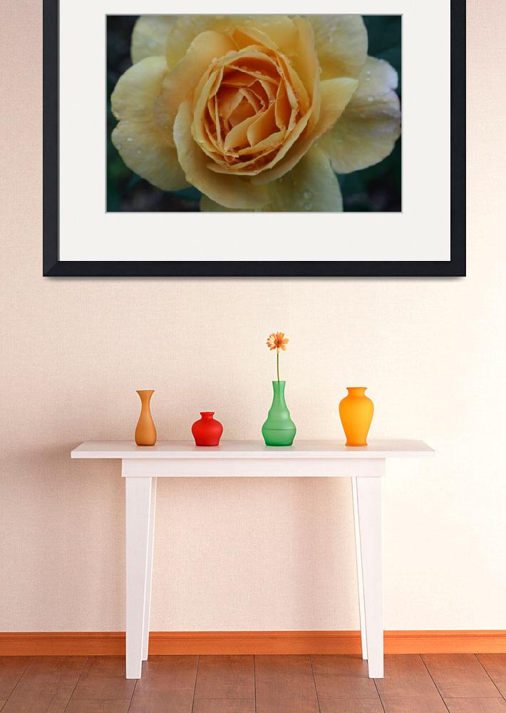 """""""Rosa I&quot  (2009) by K_Brook_Photography"""