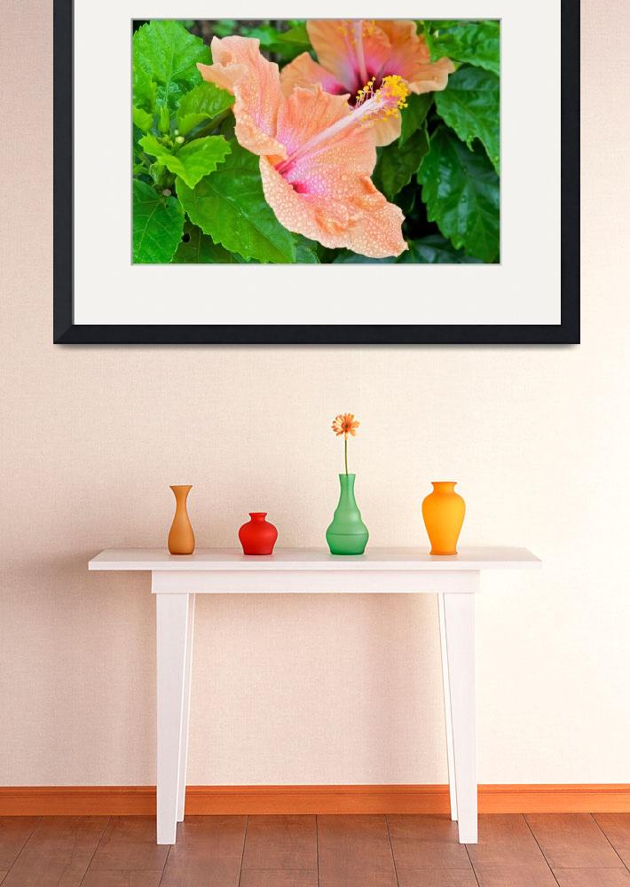 """""""Hibiscus&quot  (2010) by ImageArt-Photography"""