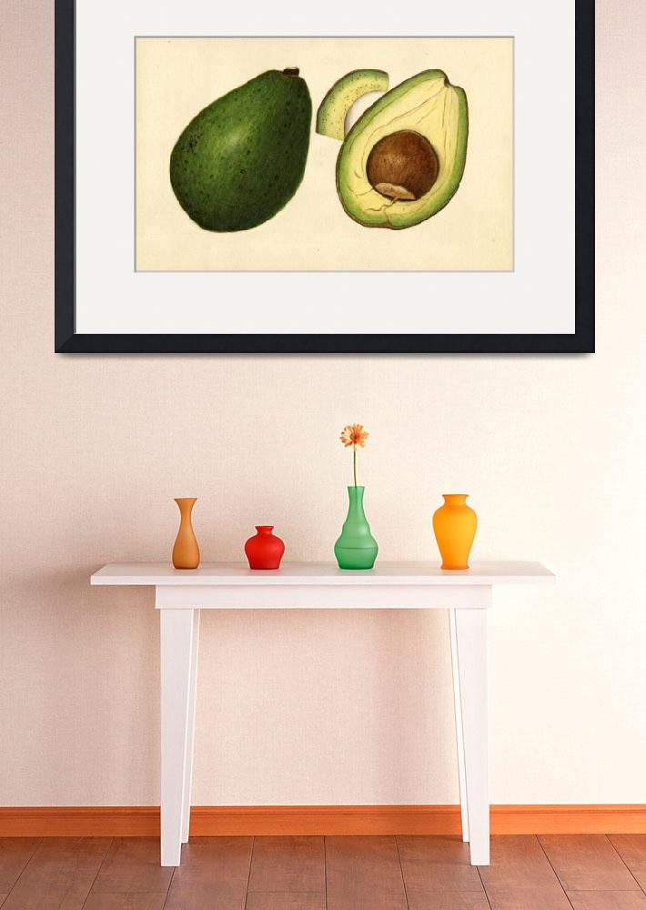 """""""Vintage Illustration of an Avocado 2&quot  by Alleycatshirts"""