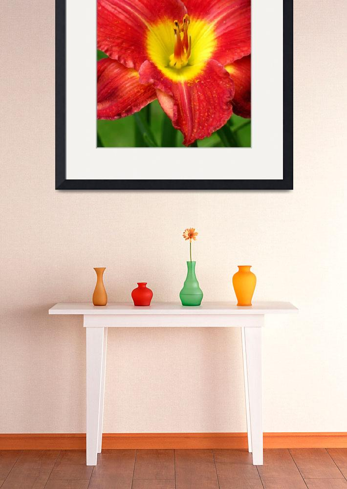 """""""Red & Yellow Daylily&quot  (2009) by mariehedtke"""