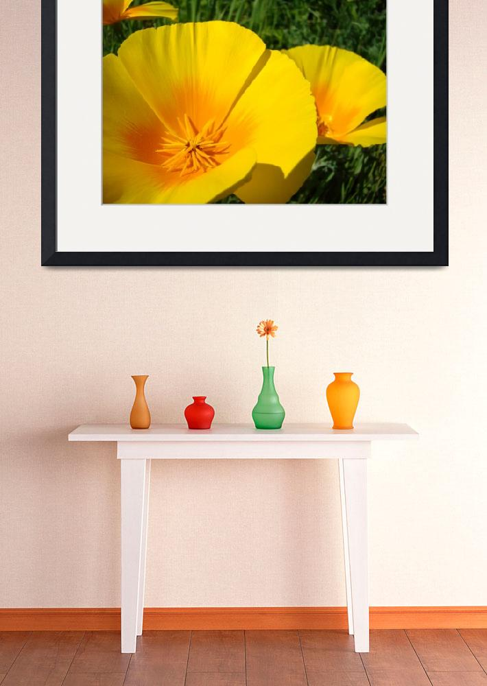 """""""Christmas Gift Gallery POPPIES Floral Art Gifts""""  (2009) by BasleeTroutman"""