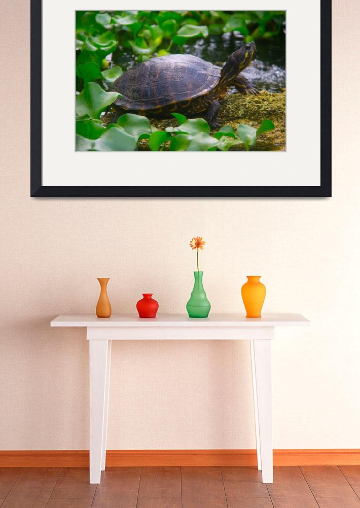 """Painted Turtle""  (2012) by ValeriesGallery"