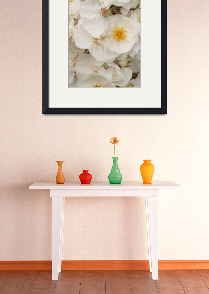 """""""White Roses""""  (2014) by monmoimages"""