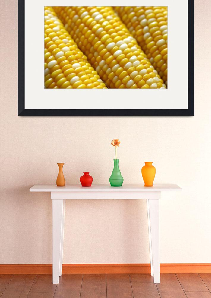 """Corn On The Cob&quot  by gallery"