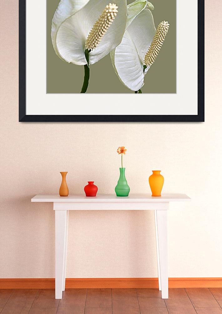 """""""A Pair of Peace Lilies""""  (2008) by Sharriman"""