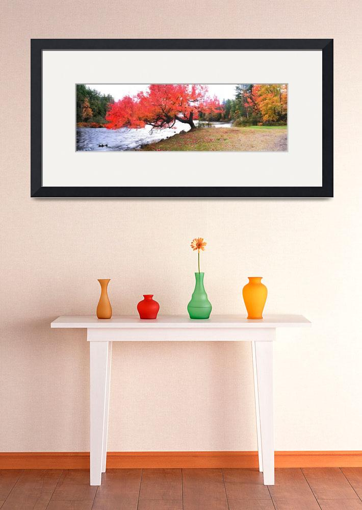 """Panorama Of Red Maple Tree, Muskoka, Ontario&quot  by DesignPics"