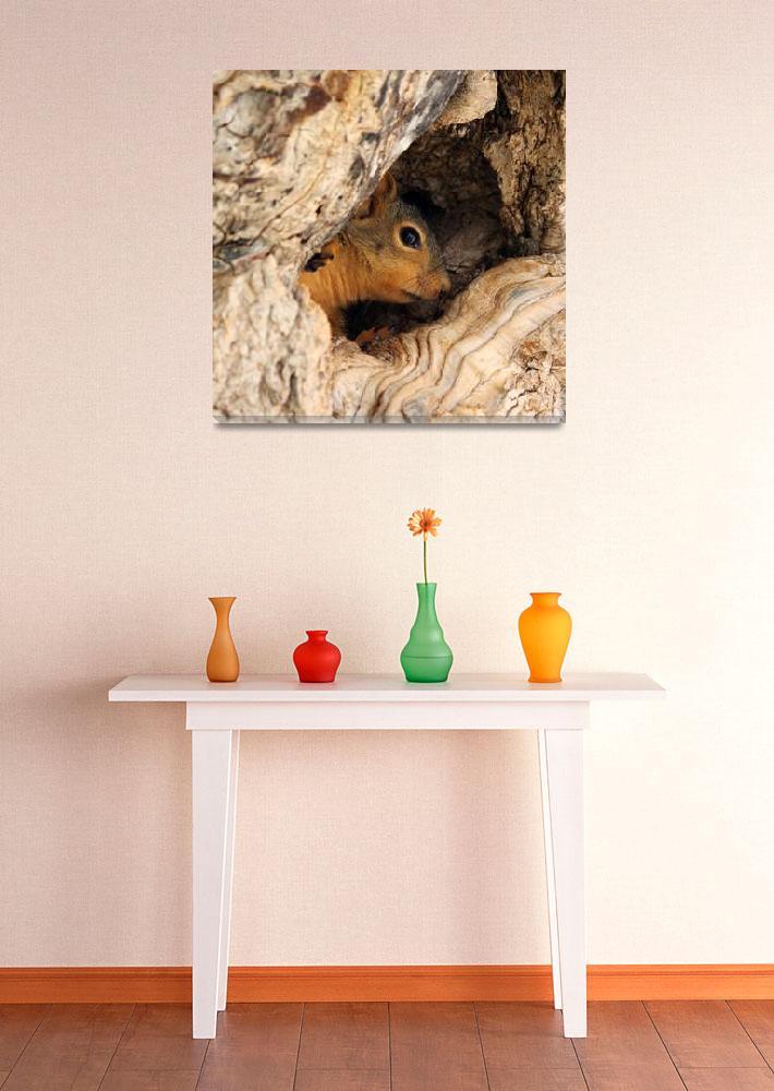 """Baby squirrel""  by cameragal"