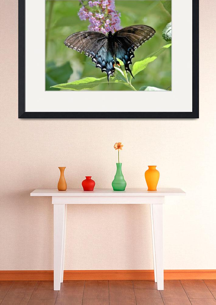 """""""Butterfly 3&quot  (2008) by davidearljohnson"""
