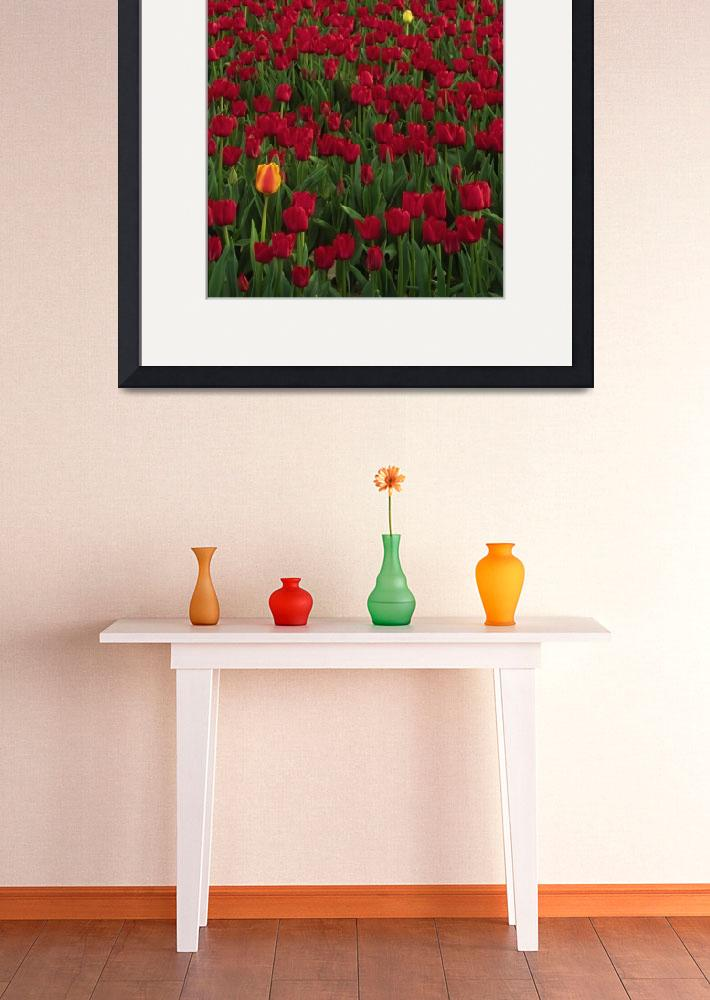 """""""Red and Yellow Tulips&quot  (2004) by Inge-Johnsson"""