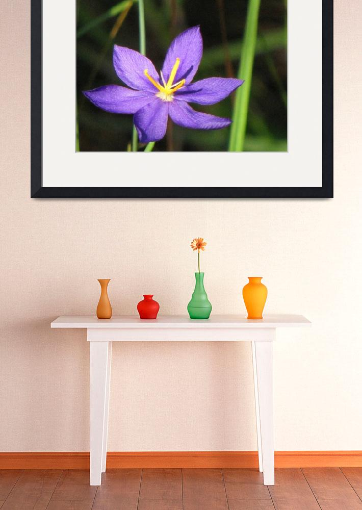 """""""Celestial Lily - Wild Lands&quot  (2009) by BABowenphotography"""