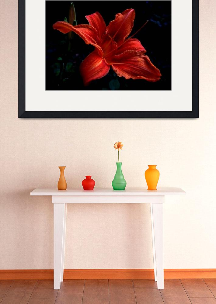 """Day-lily 1""  (2008) by bavosiphotoart"