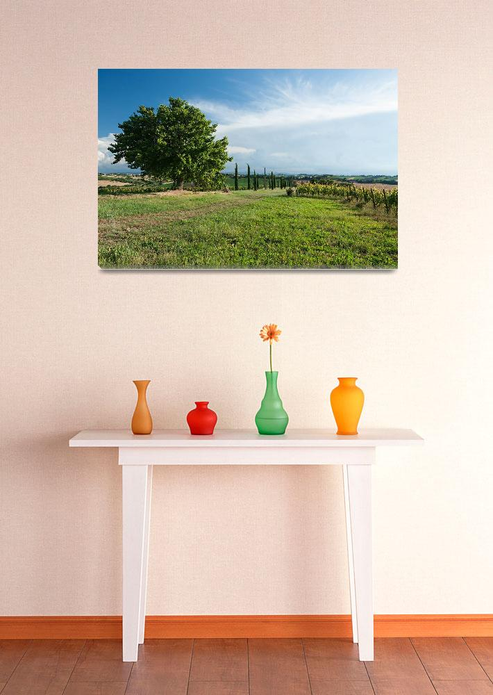 """""""Panoramic view of vineyard and fields&quot  by luigimorbidelli"""