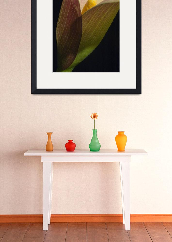 """""""calla lily&quot  (2006) by JulieScholz"""