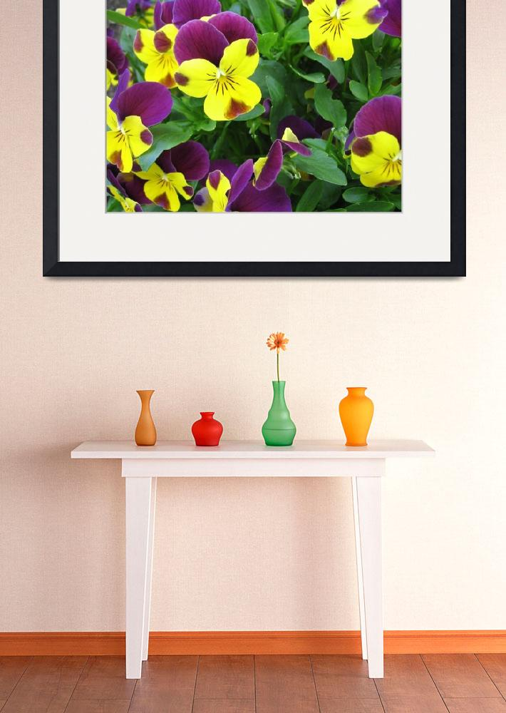 """Pansies&quot  (2006) by kellanbaker"