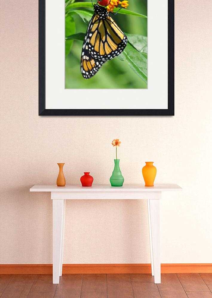 """Monarch & Milkweed No2&quot  (2009) by evansonart"