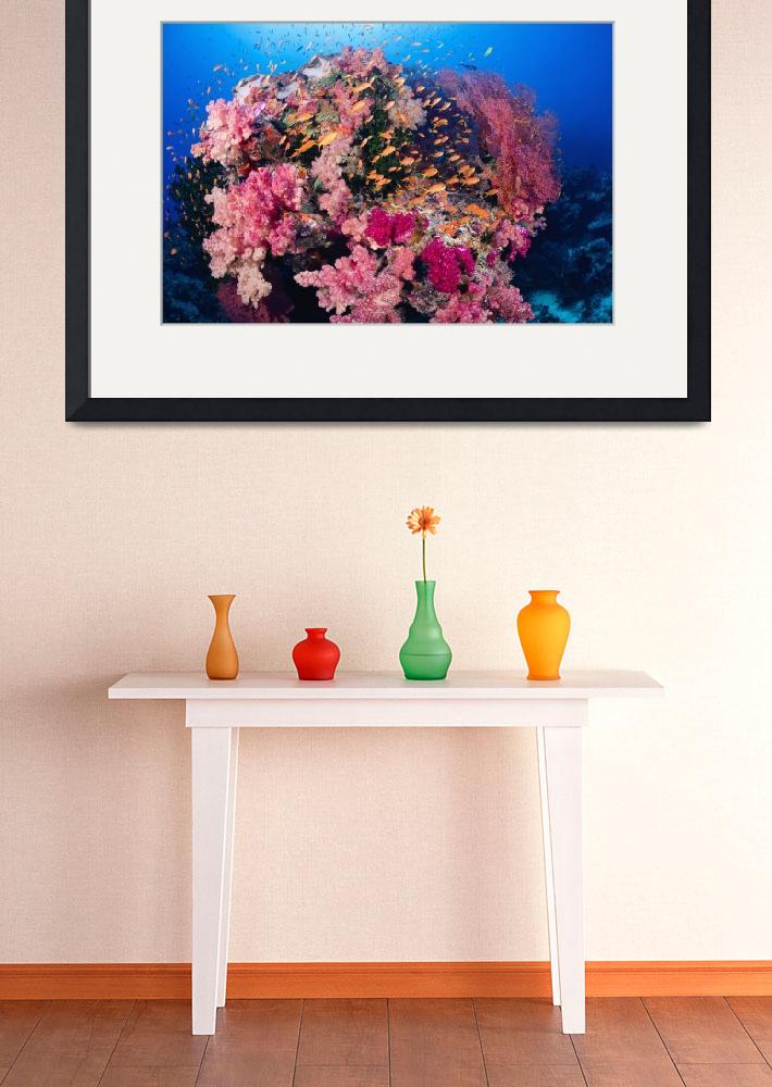 """Fiji, Alconarian And Gorgonian Coral With Schoolin&quot  by DesignPics"