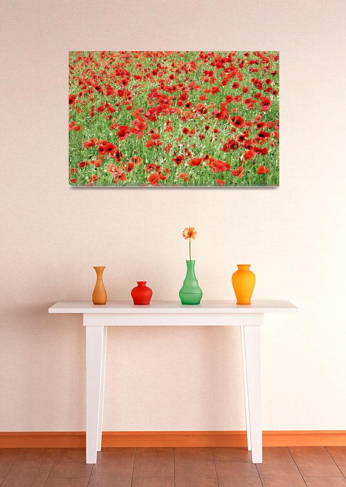 """Field of Poppies""  (2007) by NatalieKinnear"
