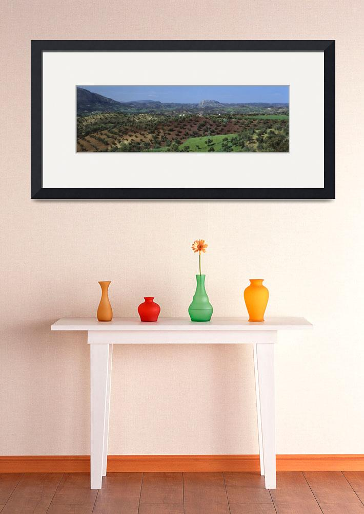 """""""Olive Groves Andalucia Spain&quot  by Panoramic_Images"""