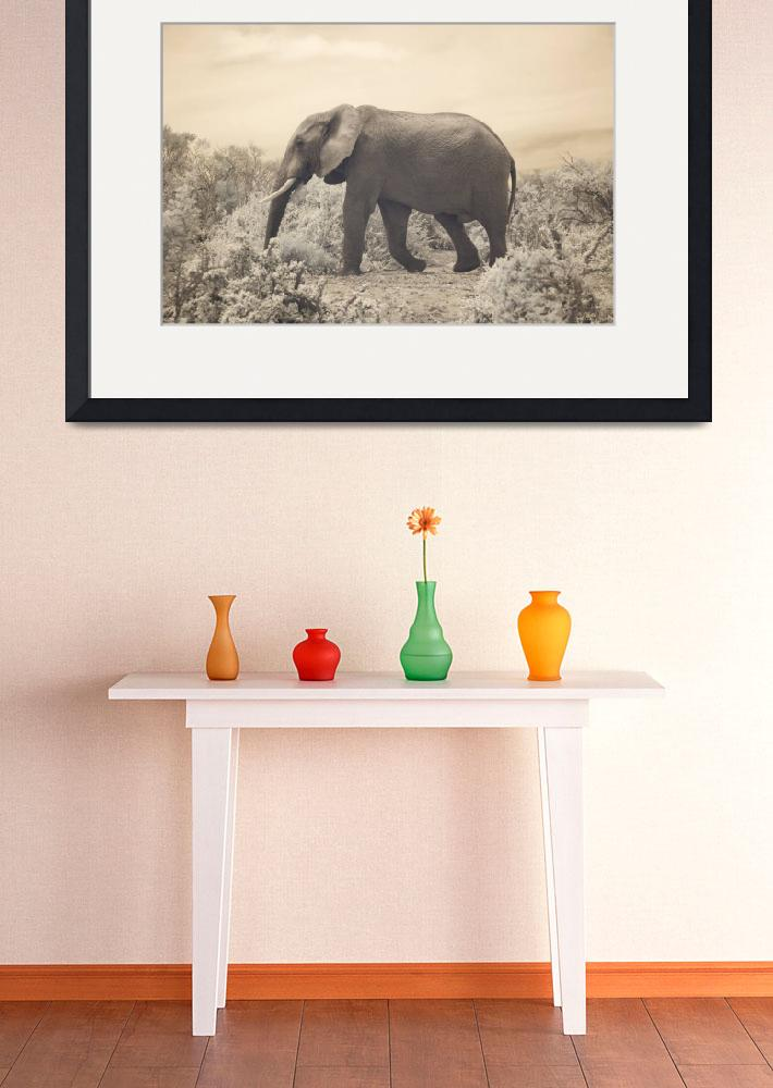 """""""Bull Elephant&quot  (2010) by redcirclephotography"""