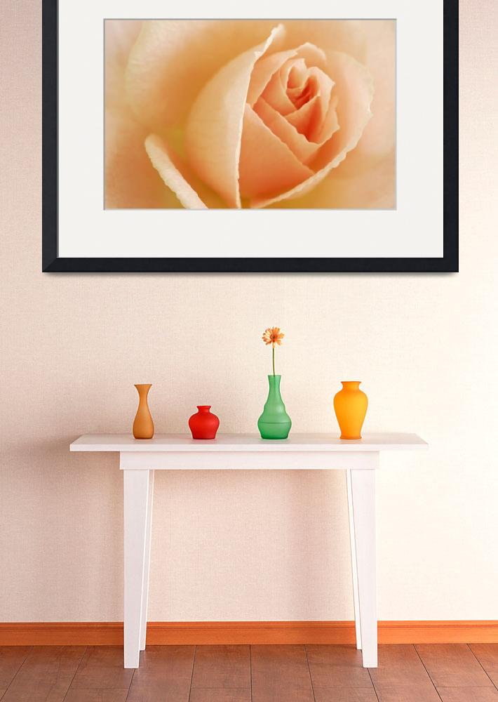 """Peach Rose I_3290&quot  (2005) by AmbientCreations"
