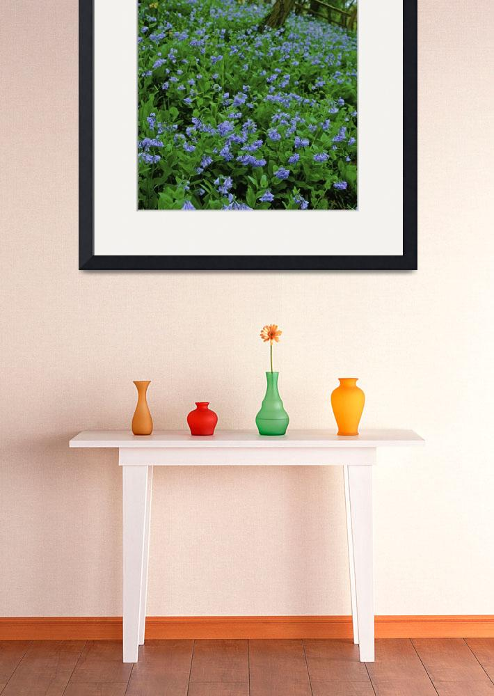 """""""Virginia Bluebells 3V426&quot  by jimcrotty"""