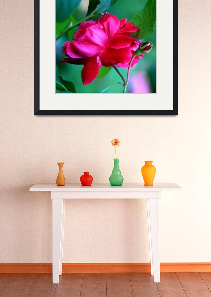 """""""Rose Squared&quot  (2010) by rayjacque"""