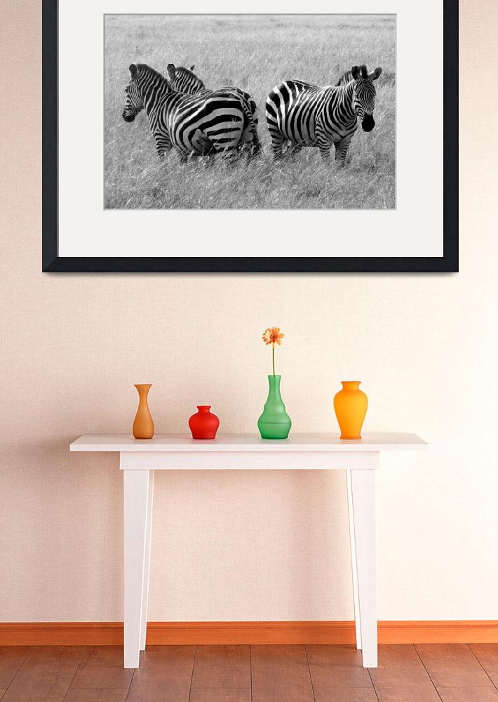 """Zebra Sentries""  (2007) by stockphotos"