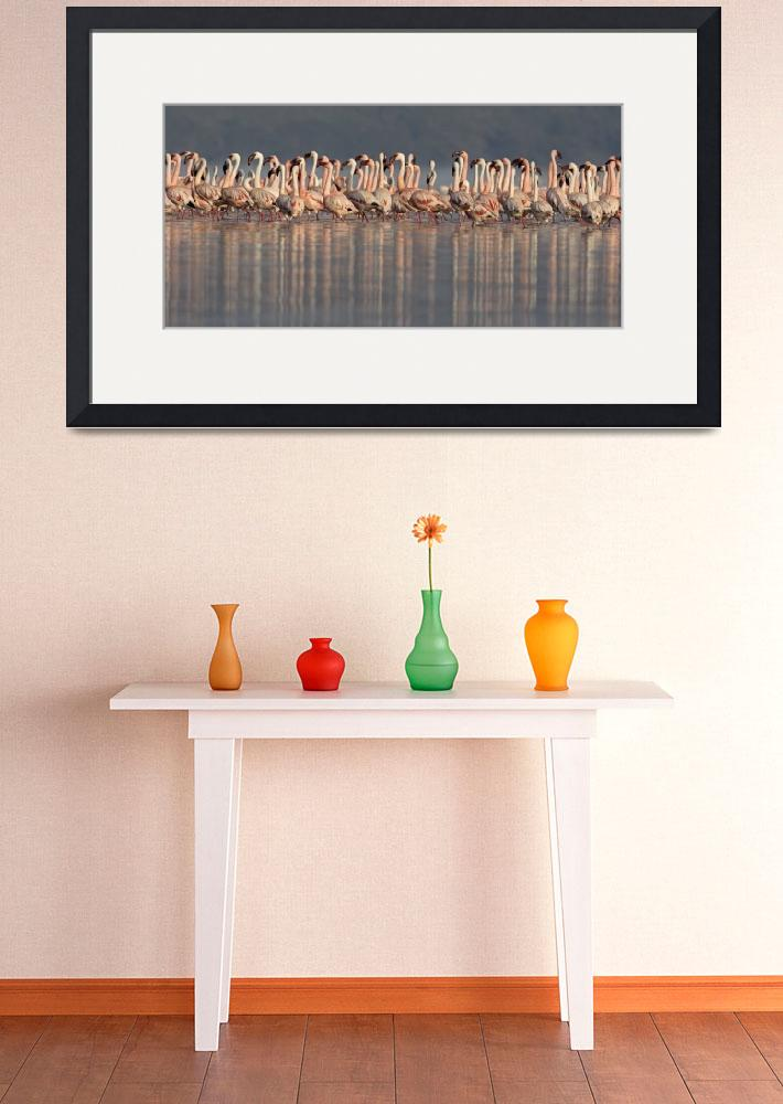 """Lesser flamingos in water""  by Panoramic_Images"