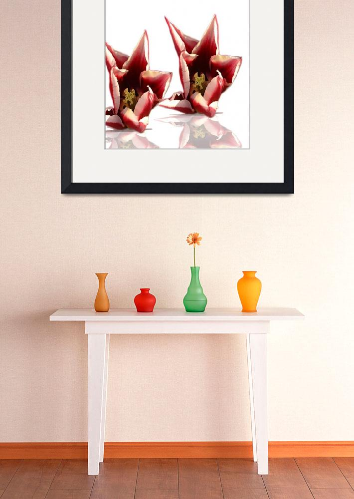 """""""Tulips With Reflexion&quot  (2006) by garlanddunston"""