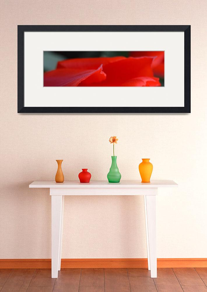 """""""""""Red Tulip 3"""" #3042315.0678 (2)&quot  (2015) by achimkrasenbrinkart"""