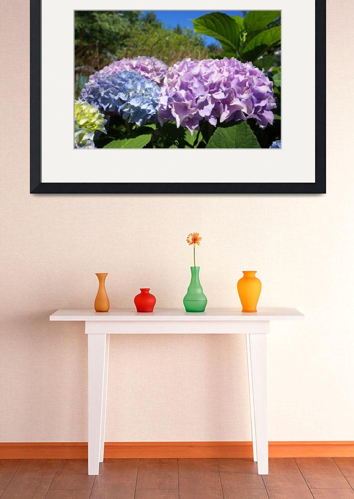 """Hydrangeas Blue Lavender Flowers art prints Floral""  (2014) by BasleeTroutman"