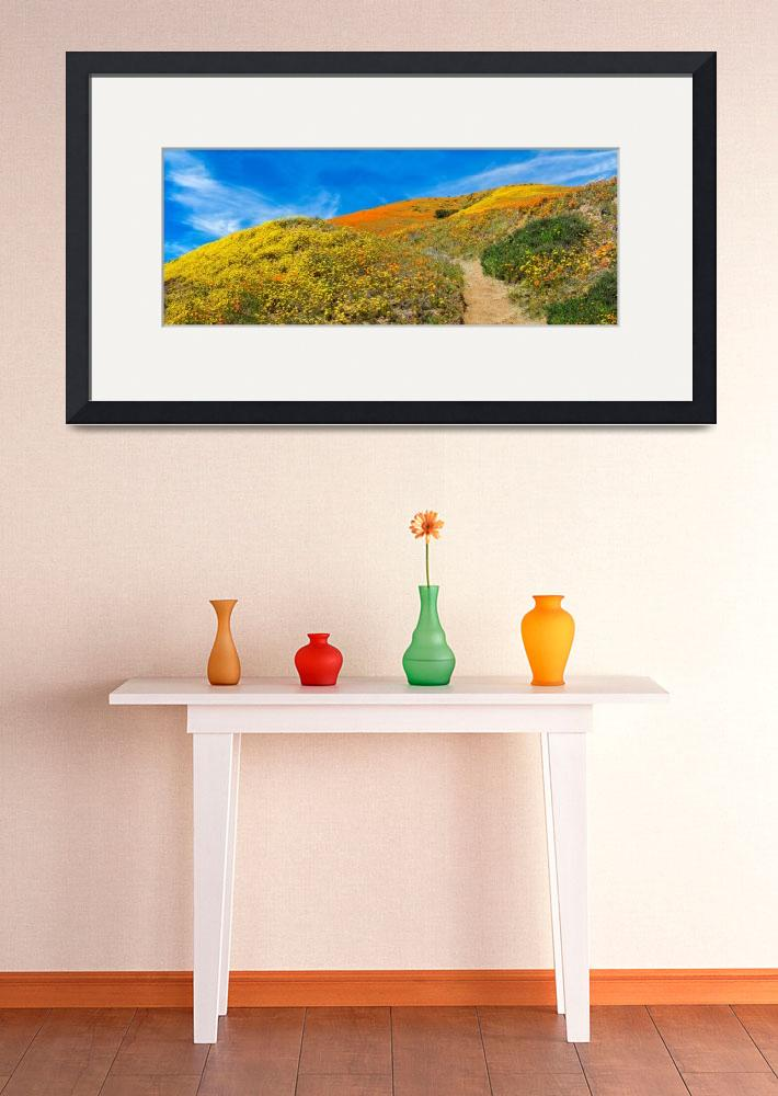 """Happy Trails Panorama - Superbloom 2019""  (2019) by LynnBauer"