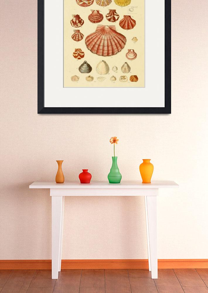 """Vintage Seashell Drawings&quot  by Alleycatshirts"