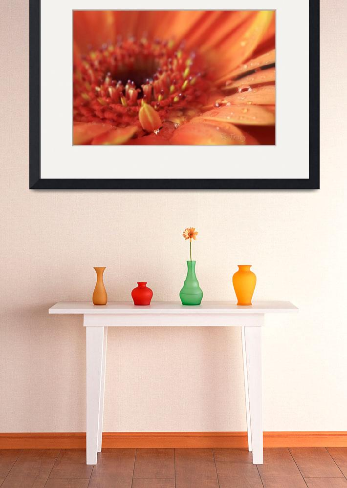 """Orange Starburst Gerbera""  (2011) by Tracy2912"