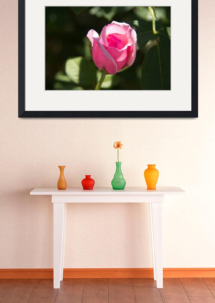 """""""Pink Rose Bud&quot  (2011) by ValeriesGallery"""