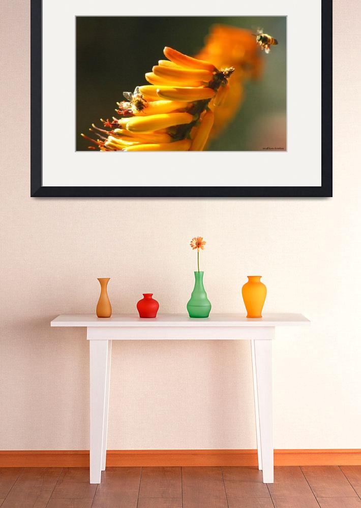 """""""Buzz On Orange&quot  (2010) by mather_boehm_images"""