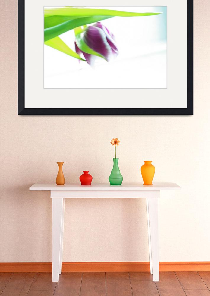 """""""Purple Tulip""""  (2009) by AlysonFennell"""