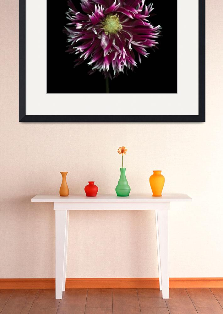 """Fringed Purple Dahlia&quot  (2012) by OGphoto"