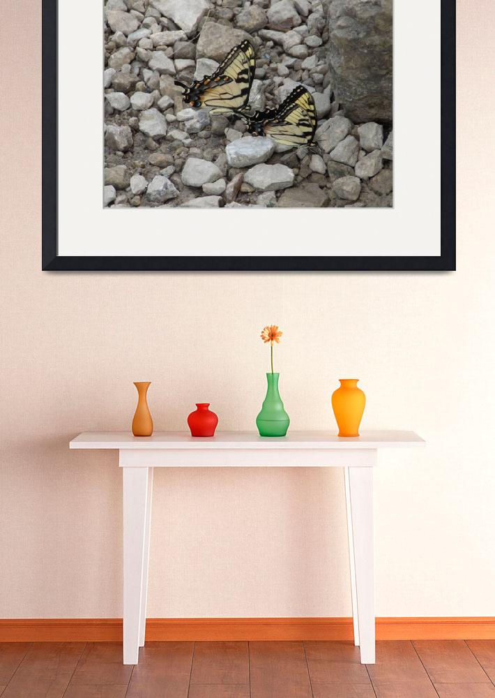 """""""Yellow Swallowtail Butterflies on Rocks&quot  (2014) by SaraOmaha"""