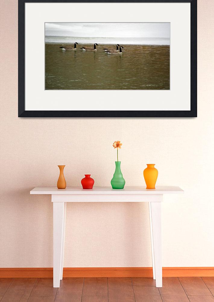 """""""Canada Geese on North Platte River&quot  (2009) by SamSherman"""