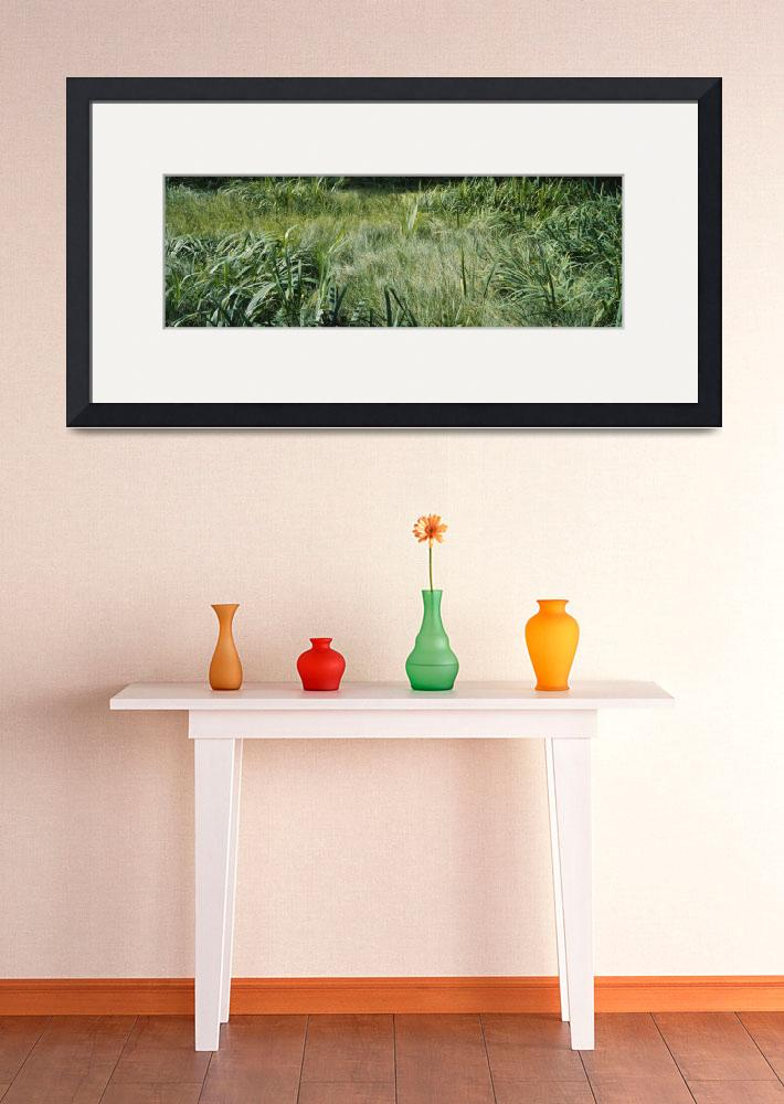 """""""Grass on a marshland&quot  by Panoramic_Images"""
