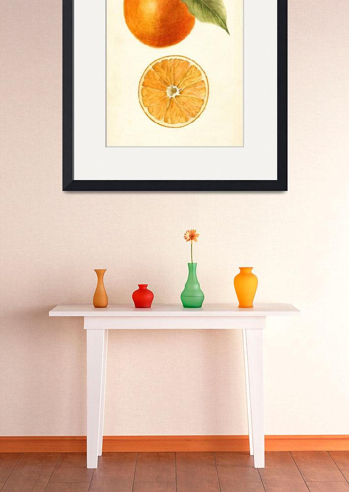 """""""Vintage Painting of an Orange&quot  by Alleycatshirts"""