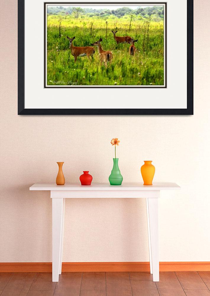 """""""White Tail Deer Family&quot  (2010) by BABowenphotography"""