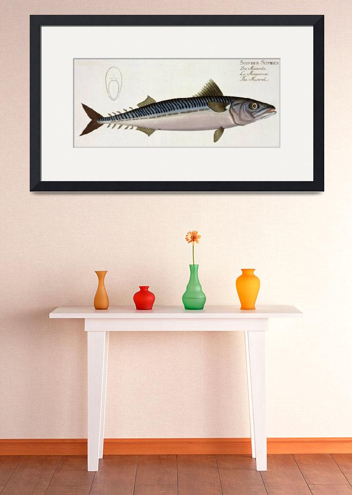 """""""Mackerel (Scomber Scomber)&quot  by fineartmasters"""
