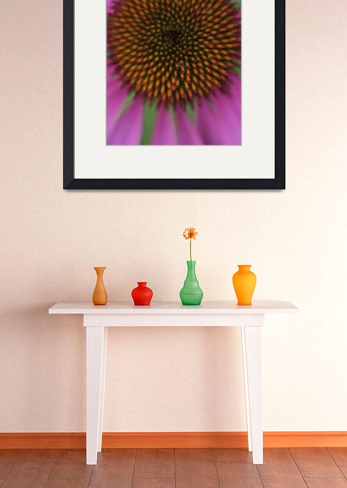 """""""Coneflower&quot  by jimcrotty"""