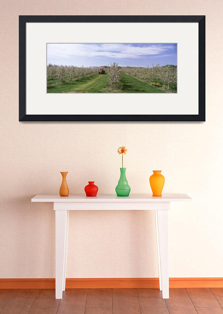 """""""Tractor moving in an apple orchard&quot  by Panoramic_Images"""