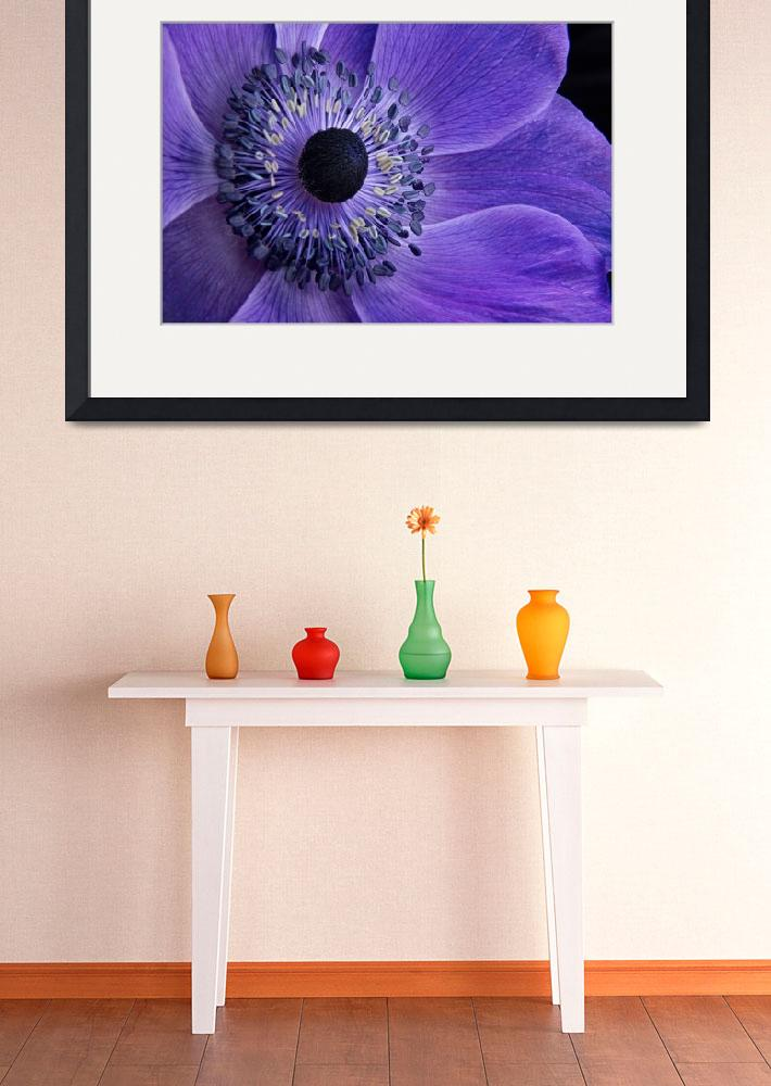 """Purple Anemone""  (2013) by AnnG"