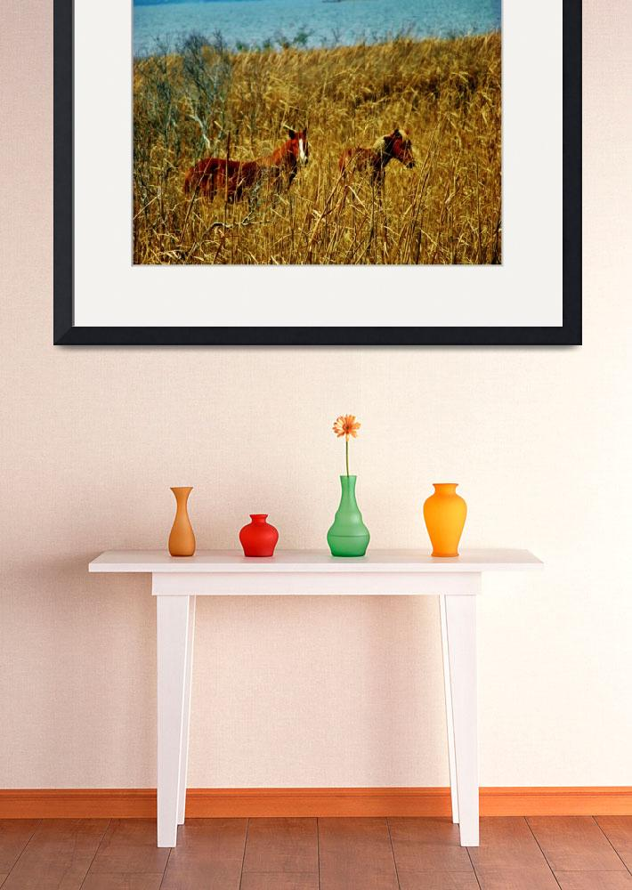 """""""Corolla Wild Horses&quot  (2012) by obxnurse"""