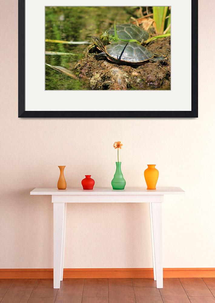 """Two Western Painted Turtles&quot  (2015) by rhamm"